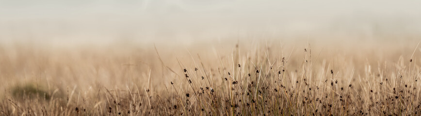 Fototapeta Long grass up close in English meadow with diffused background obraz