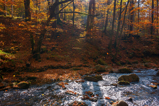 water stream in the forest. beautiful autumn nature scenery with colorful foliage on the trees. mossy stones on the shore. warm sunny weather