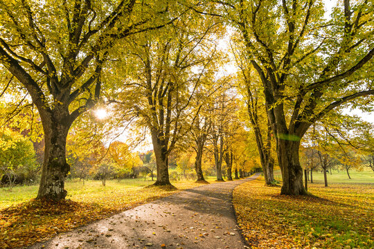 Scenic tree-lined county road in autumn with sun shining through the yellow leaves of the trees
