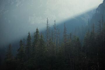 Fototapeta fog in the mountains obraz
