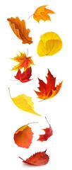 Fototapeta Colorful autumn tree leaves falling, isolated on white background, vertical obraz