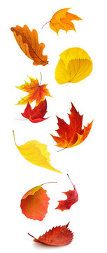 Colorful autumn tree leaves falling, isolated on white background, vertical