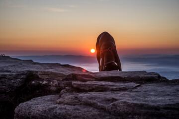 Fototapeta Pies na skałach podczas wschodu słońca  obraz