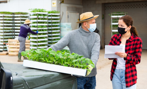 Greenhouse man worker in protective face mask delivering trays of seedlings to young woman farmer