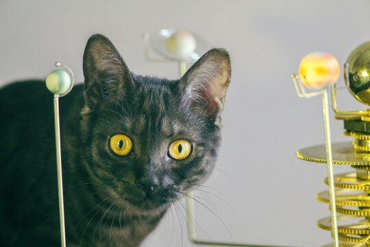 Black cat next to the solar system model on a light background