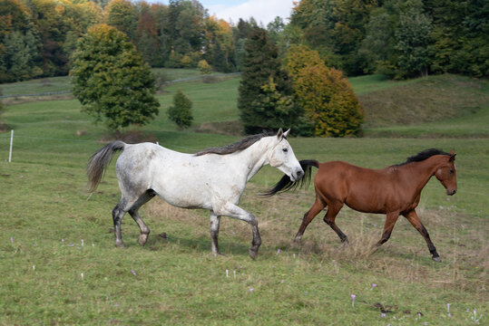 Animal. Horses on the meadow.