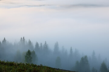 Fototapeta Picturesque view foggy forest in mountains on morning obraz
