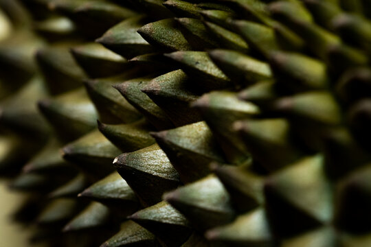 Closeup spike of durian the king of tropical fruits. thorn textures.