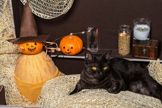 Two pumpkins and a black cat in a brown chest against the background of bottles with a potion.