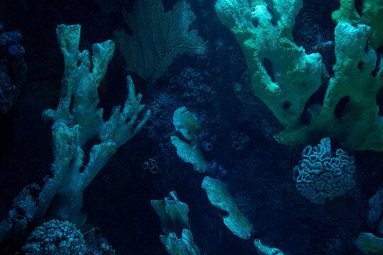 dark coral reef formation on the ocean floor