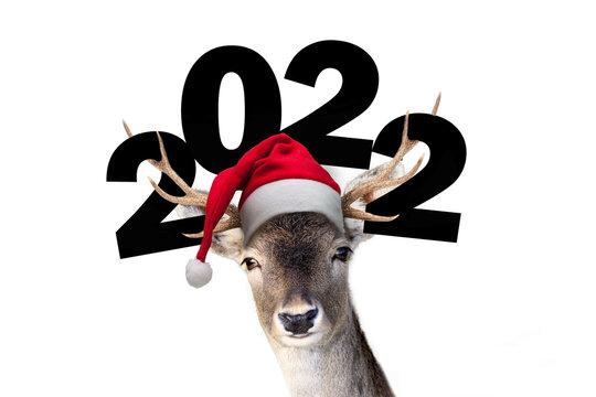 Rentier mit Nikolausmütze und der Jahreszahl 2022