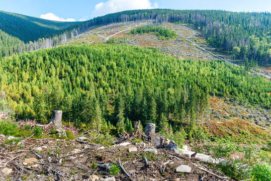 Forest deforestation, cut trees, cut forest environment