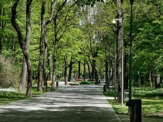 Obraz Park drzewa - fototapety do salonu