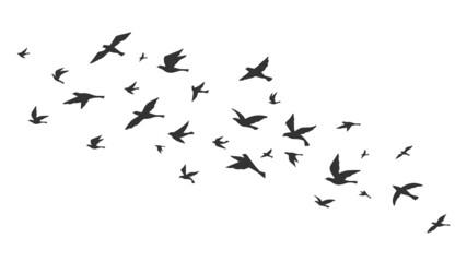 Fototapeta Flying bird. Free birds flock in flight black silhouettes. Tattoo image, freedom symbol wildlife vector illustration obraz