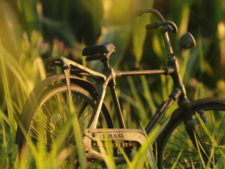 old bicycle on a grass