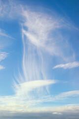 Obraz Bizarre white clouds in blue sky.  Cirrus cloud,  natural background - fototapety do salonu