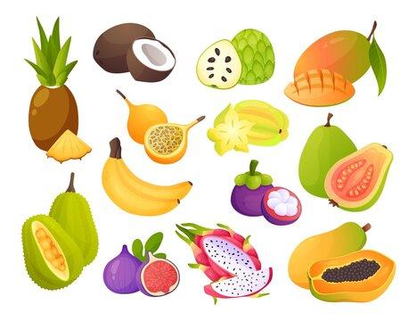 Cartoon exotic fruits. Juicy carambola and maracuya. Sweet passionfruit, mangosteen or jackfruit. Natural cherimoya, fig and pitaya. Pineapple, mango and guava. Vector vitamin food set