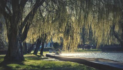 Fototapeta Poranek nad jeziorem obraz