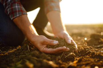 Fototapeta Expert hand of farmer checking soil health before growth a seed of vegetable or plant seedling. Agriculture, gardening, business or ecology concept. obraz