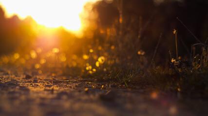 Fototapeta Macro de cailloux sur un chemin de terre, illuminés par le coucher du soleil, en contre-jour obraz