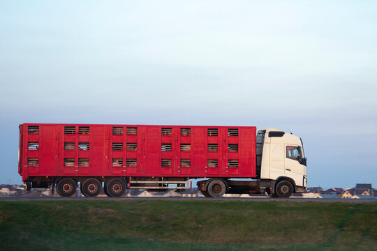 live animal transport truck move on road, side view