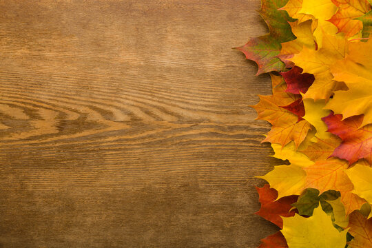 Fresh beautiful colorful maple leaves on dark brown wooden table background. Closeup. Autumn concept. Empty place for inspirational text, quote or sayings. Top down view.