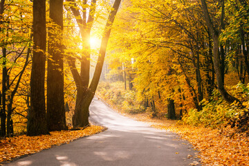Obraz Picturesque view of the autumn road through the forest with sunlight. - fototapety do salonu