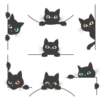 Spy cat collection