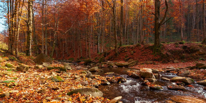 mountain river in the autumn forest. trees in fall foliage. leaves on the stones and ground by the shore of a clean water flow. warm sunny weather