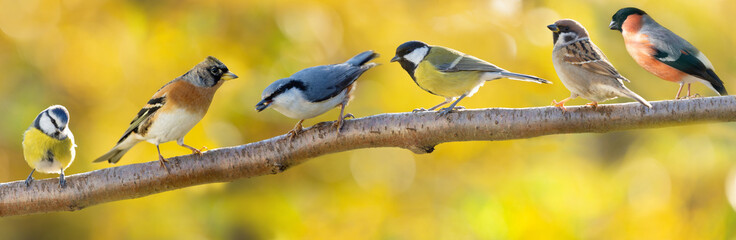 Group of various little birds sitting on branch of tree on autumn background