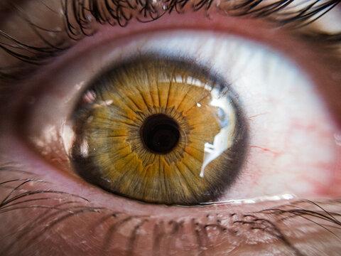 Macro do Olho Verde
