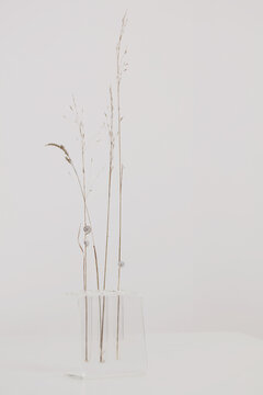 Vase with dry flowers on Vase with dry flowers on white table. Minimalist style home interior decoration. Simplicity and Calm concept.