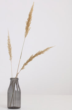 Vase with dry flowers on white table. Minimalist style home interior decoration. Simplicity and Elegance concept.