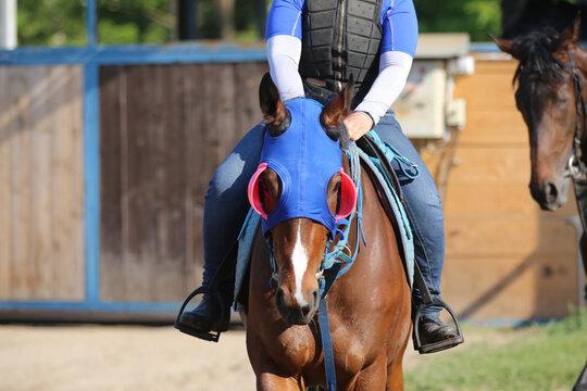 Head shot closeup portrait of a young racehorse
