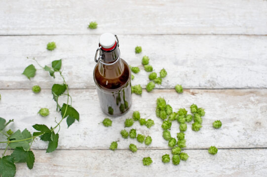 Beer bottle and hops on white wood