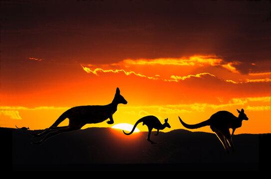 Kangaroos at sunset in ouitback Australia.
