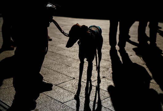 Animal rights activists demonstrate in Madrid