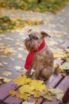 Dog in a red scarf sits on a bench