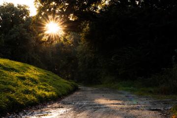 Fototapeta przebijające się słońce przez konary drzew  obraz