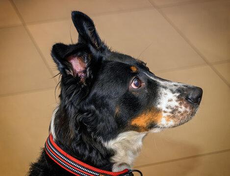 Black dog looking alert