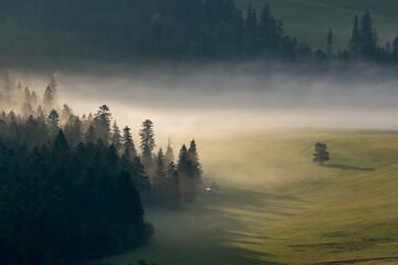 Obraz Poranna jesienna mgła. - fototapety do salonu