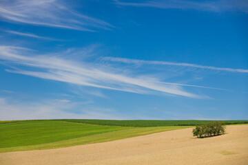 Fototapeta Sielankowy krajobraz. obraz