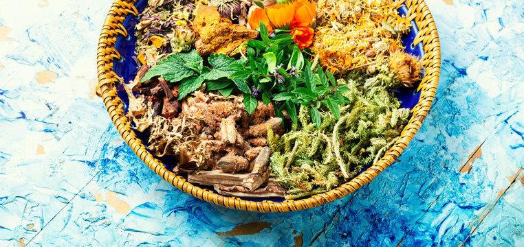 Medicinal plants in medicine