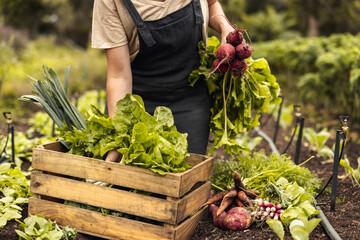 Obraz Female farmer gathering fresh vegetables on her farm - fototapety do salonu