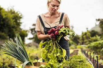 Obraz Self-sustainable farmer harvesting a variety of fresh produce - fototapety do salonu
