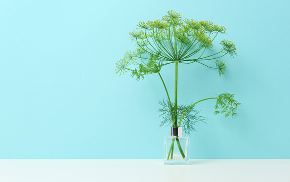 glass vase with a bouquet of dill on a white table. Minimalism in the interior