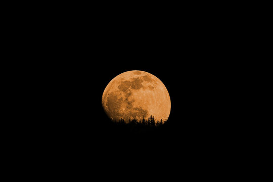 Red moon with a forest isolated on black background. Waxing gibbous phase, a few days before the full moon