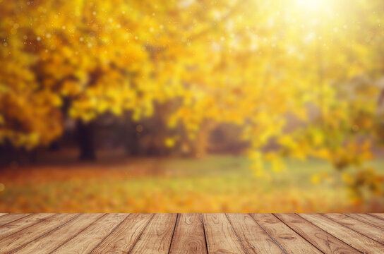 Blurred background of an autumn scene