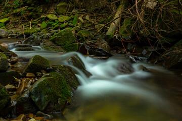 Fototapeta mountain stream in the forest obraz