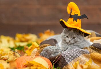 Funny kitten wearing hat for halloween sits inside a basket on warm plaid with autumn leaves. Empty space for text